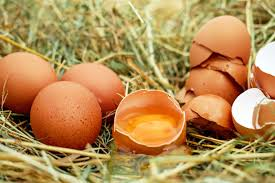 Can Cats Eat Eggs? Are Eggs Beneficial or Toxic to Cats? Raw Eggs