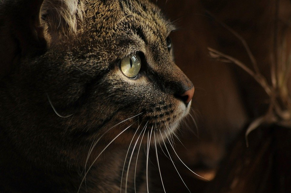 Can Cats See in the Dark- Do Cats Have Night Vision?