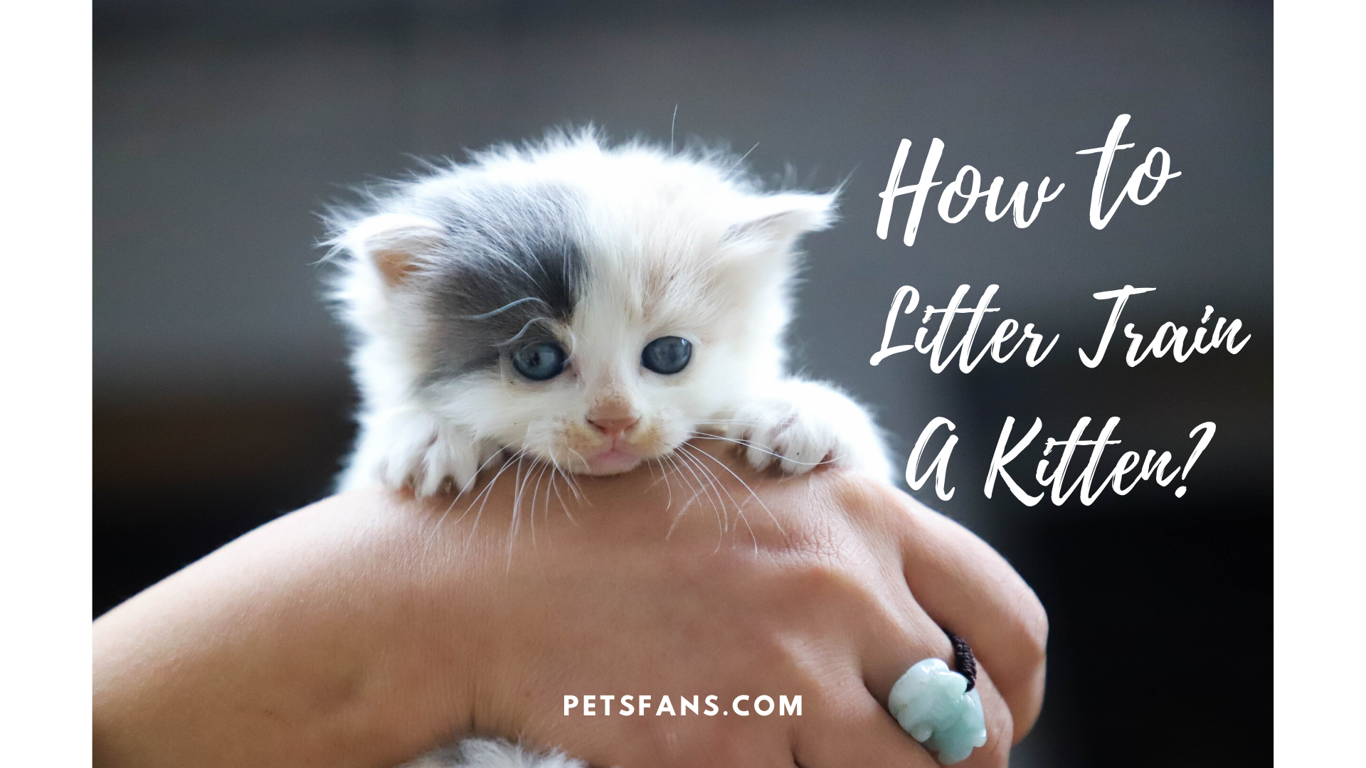 How To Litter Train A Kitten
